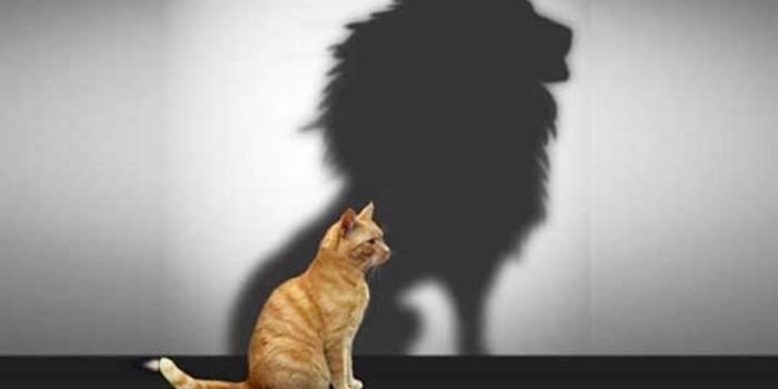 încredere în sine și viziune