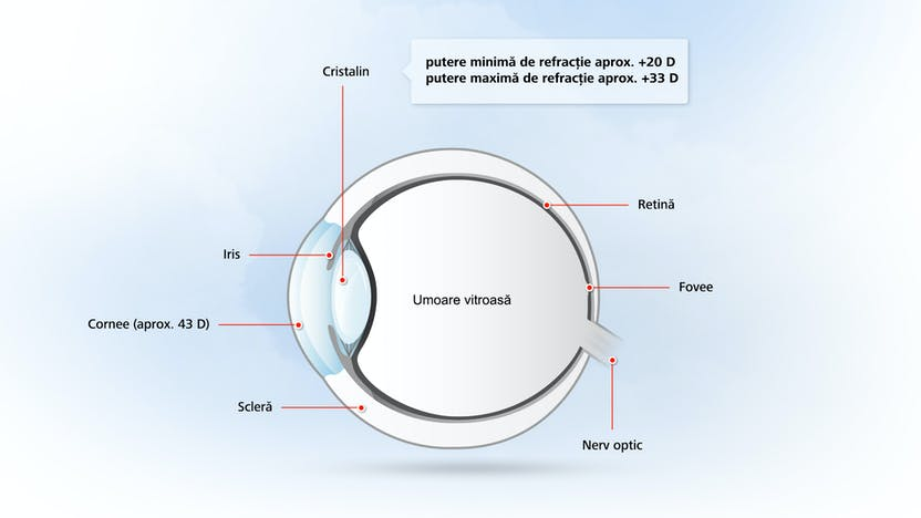 structura organului uman al vederii