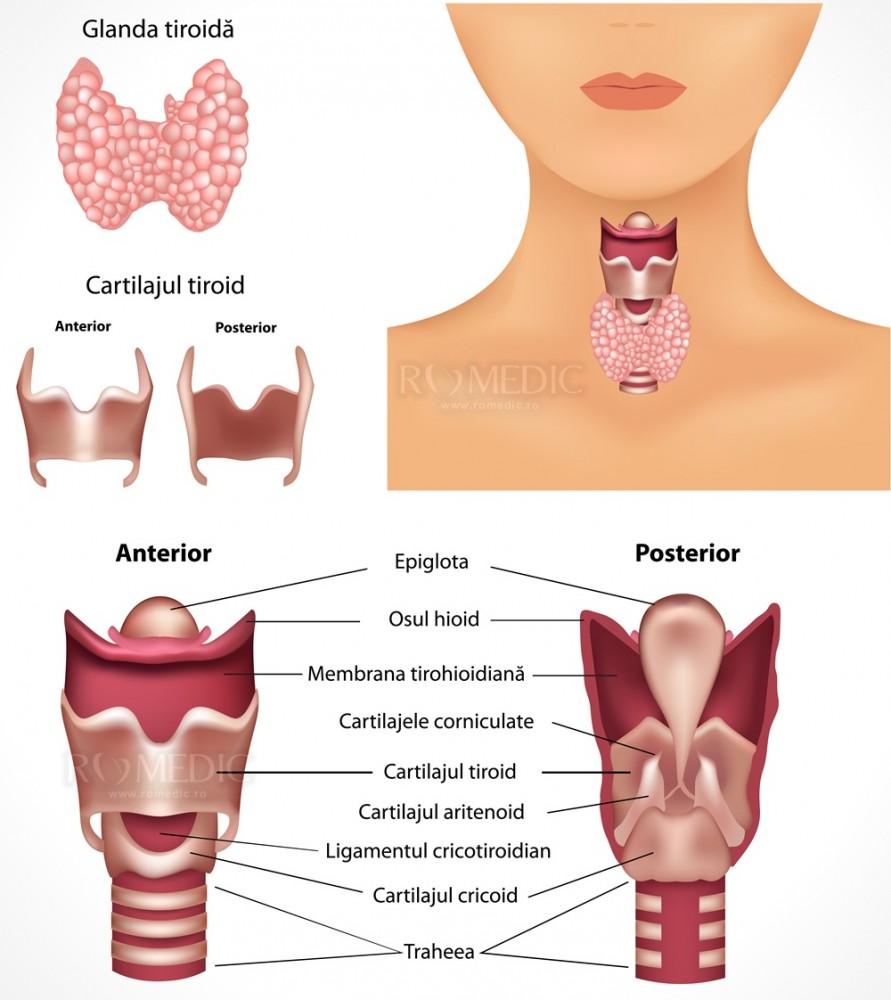 efectul tiroiditei autoimune asupra vederii)