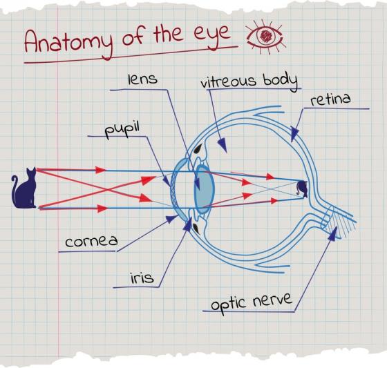 cum să cauzezi pierderea vederii