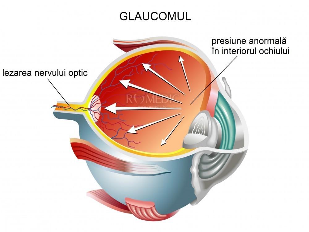 anatomia clinică și fiziologia organului vizual câte rânduri din tabel pentru vedere
