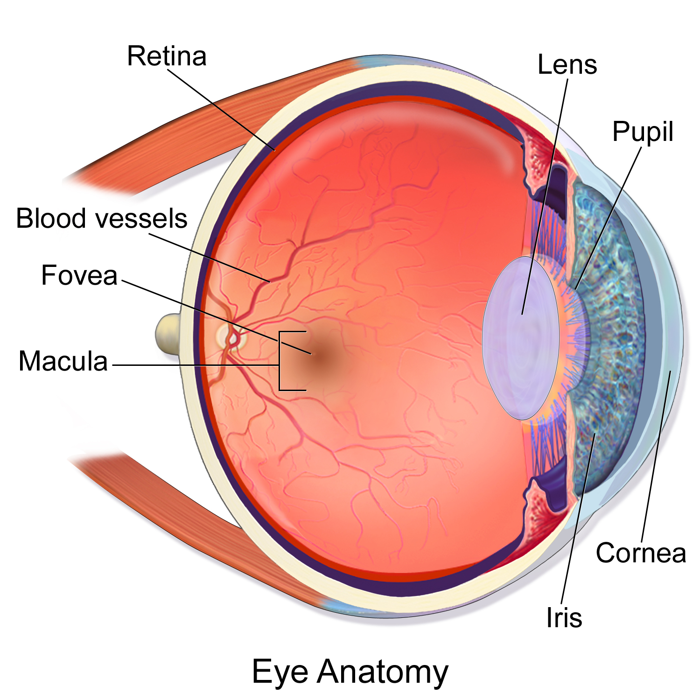 test de vedere macula