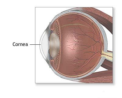 Modelare 3D în oftalmologie)