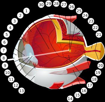Miopia cu ochelari și fără schemă de ochelari