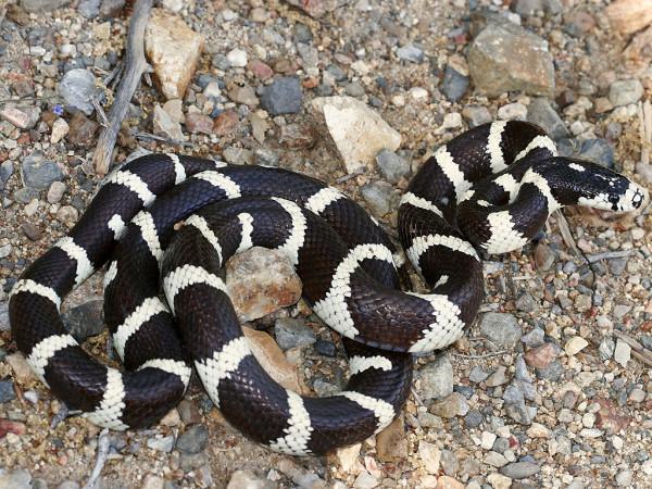 șarpele are vedere