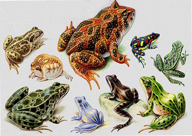 particularitatea vederii amfibienilor