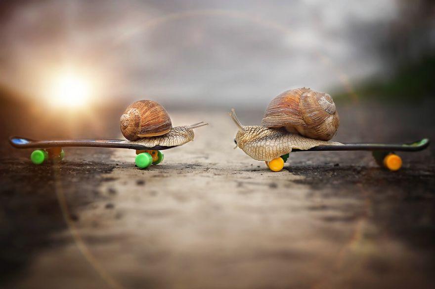 snail's - Traducere în română - exemple în engleză | Reverso Context