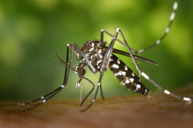 țânțar - Română-Poloneză Dicţionar - Glosbe