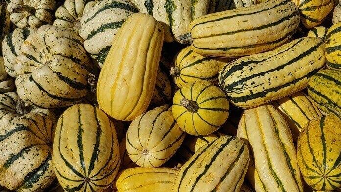 Studii privind importanța și utilizarea semințelor de dovleac în obțin – bioresurse