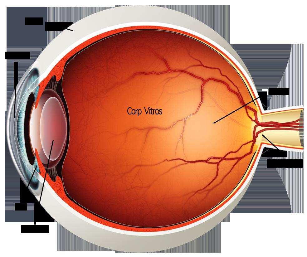 preveni afectarea vizuală legată de vârstă)