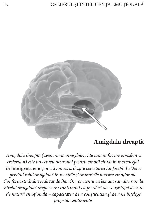 viziunea zonei creierului