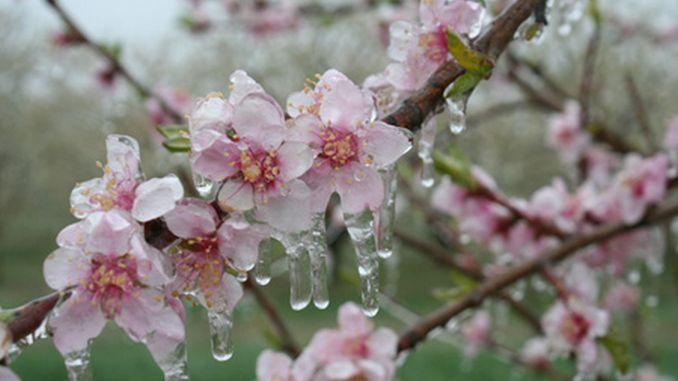 vederea și primăvara
