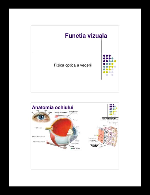 anatomia organului vizual al sistemului nervos central