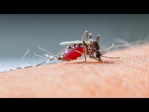 care este vederea unui țânțar)