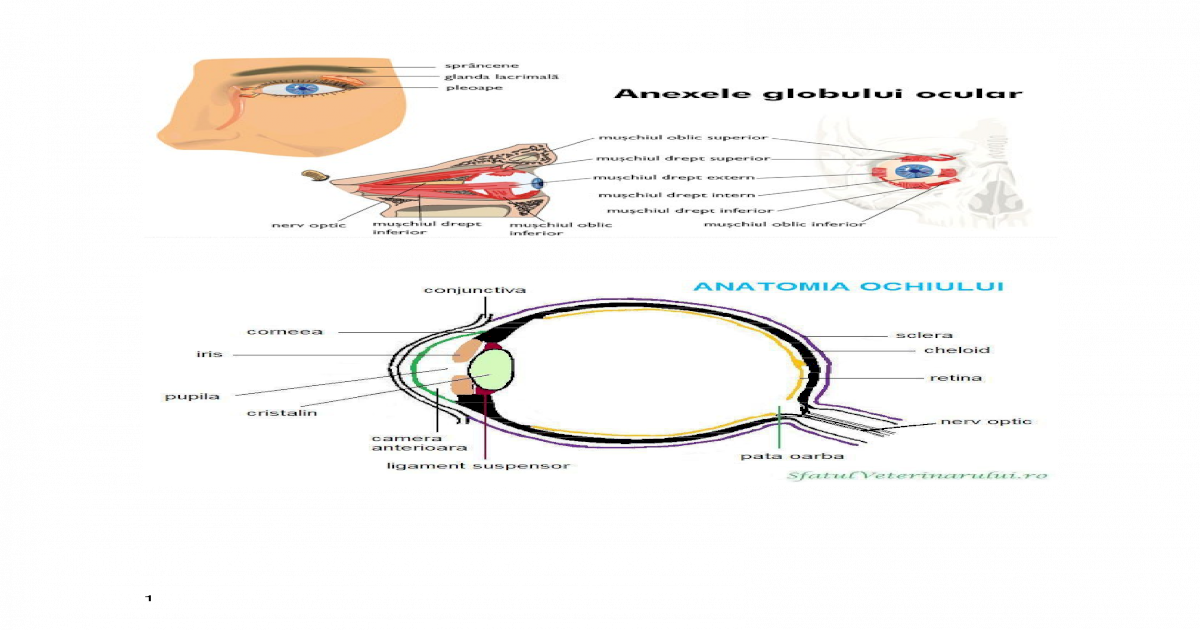 condiții necesare formării vederii binoculare