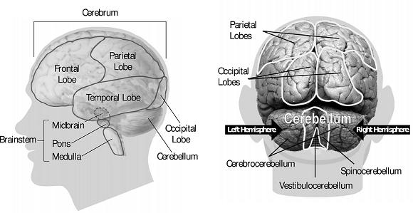 vedere slabă din cauza creierului