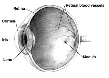 definirea oftalmologiei bolilor la nivelul retinei)