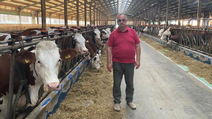 vaci și viziune