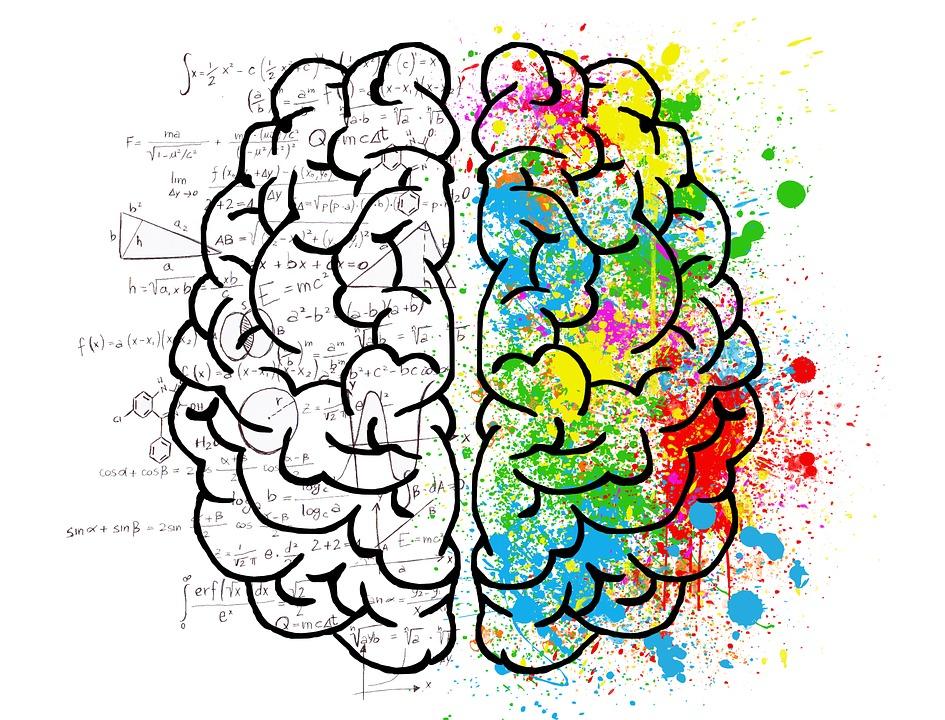 care parte a creierului este viziunea)