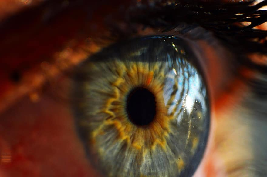 ochi, uite, ochi verzi, viziune, iris, cili, cornee