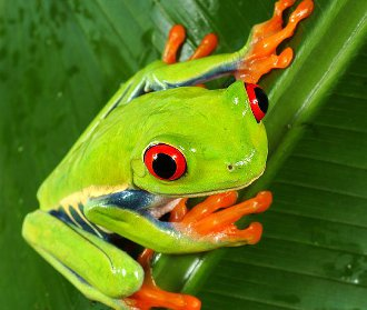 Diferența dintre reptile și amfibieni. Lista reptilelor și a caracteristicilor reptilelor