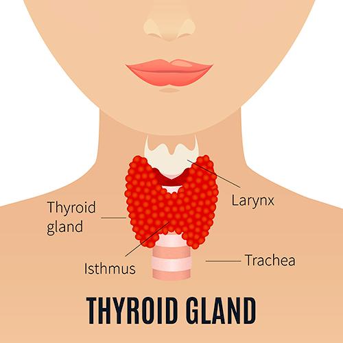 Glanda tiroida - afectiuni, cauze, simptome, tratament   Bioclinica