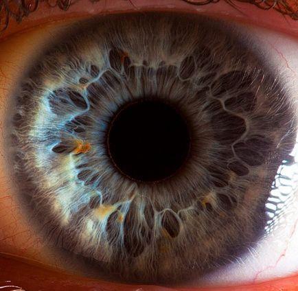 viziune cu pupile dilatate viziune în poliția rutieră