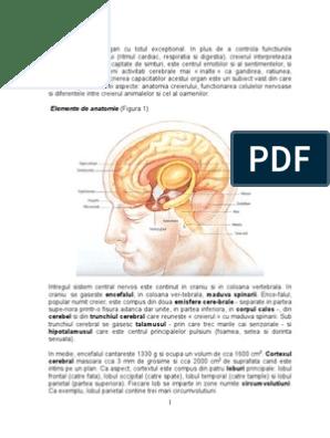 care parte a creierului este viziunea