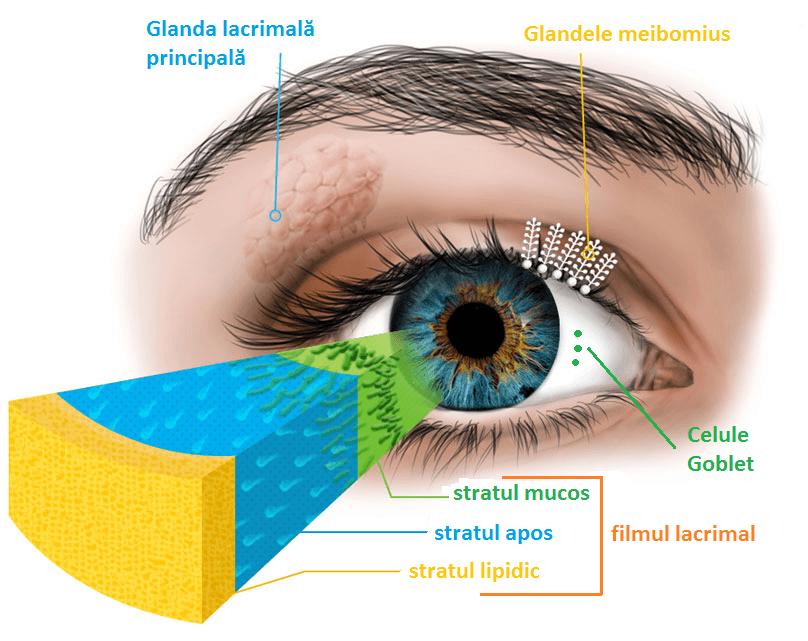 oftalmologie midges în ochi)