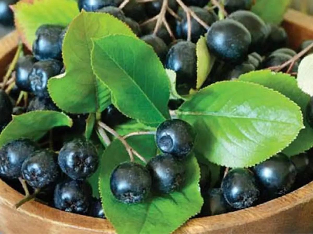 refacerea fructelor de viziune
