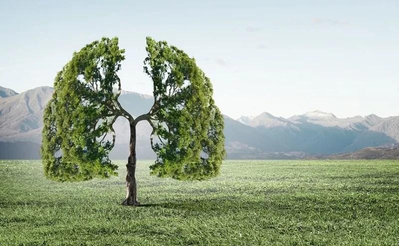 cea mai bună viziune în natură)