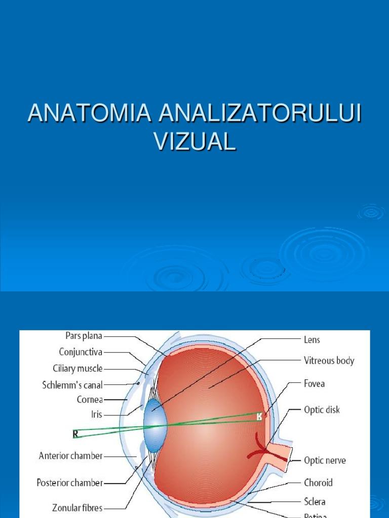 Introducere în anatomia oftalmologiei și fiziologia organului vizual