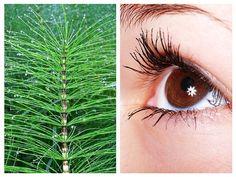glaucom cum se restabilește vederea)