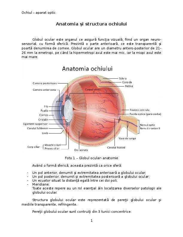 Anatomie: analizatorul vizual