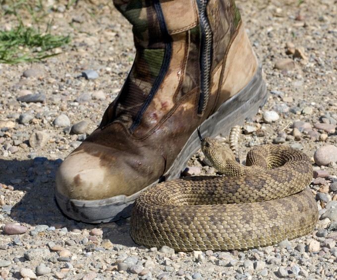 Mușcătura de șarpe