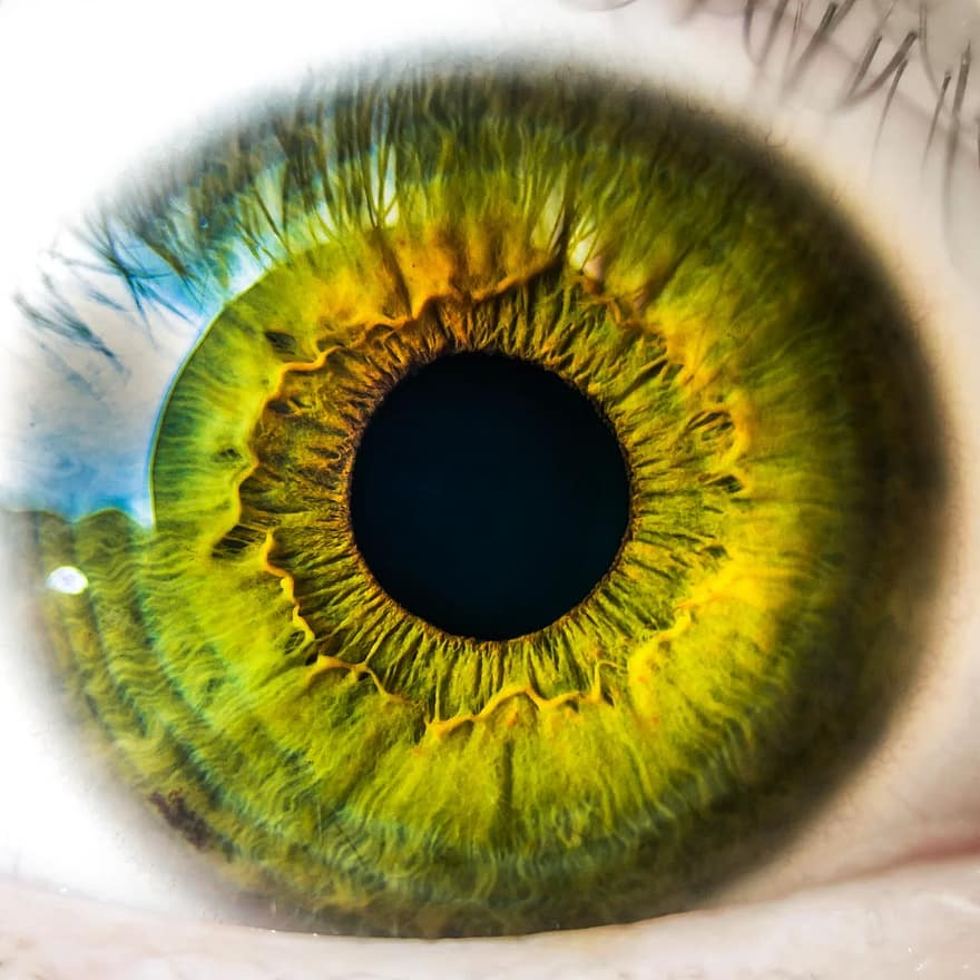 ochi și viziune optică)