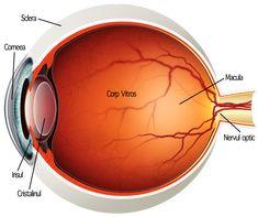 care și-au recâștigat vederea fără operație