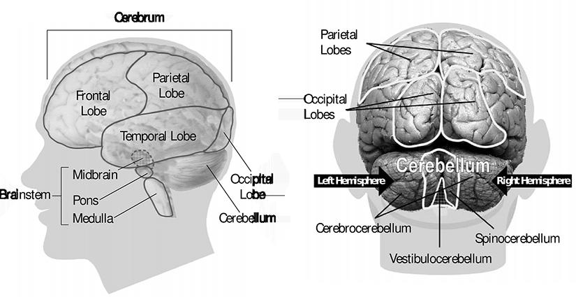 tumori secundare ale organului de vedere