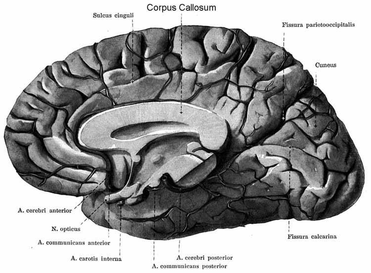 vederea bolii parkinson tratament spa al organelor de vedere