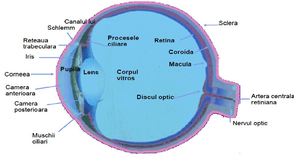 ce este acuitatea și profunzimea vederii când apare vederea după operație