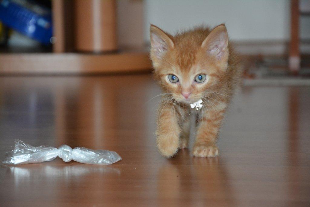 Cum demonstrează pisicile afecțiunea pentru oameni