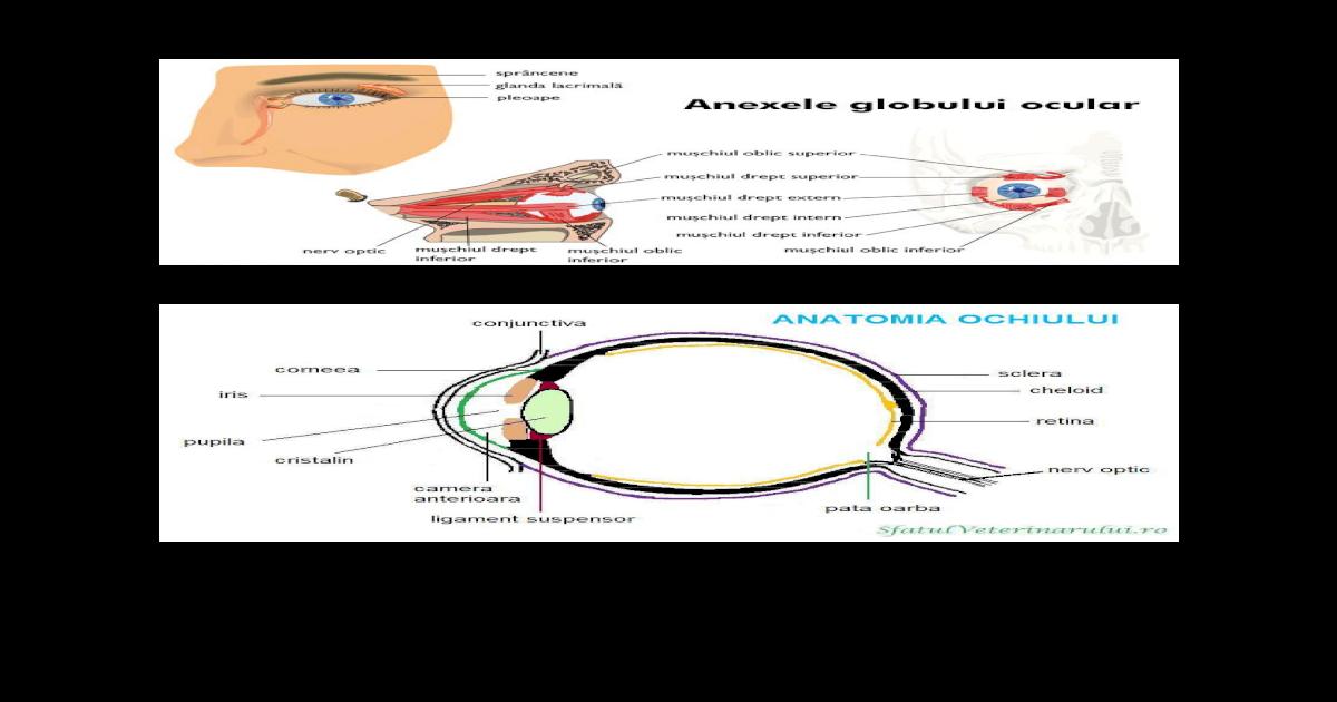 diagramă de acuitate dioptrică