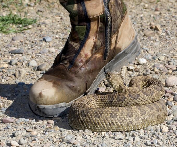 """Fosila unui """"sarpe biblic"""" cu picioare a uimit cercetatorii. Unde a fost descoperita"""