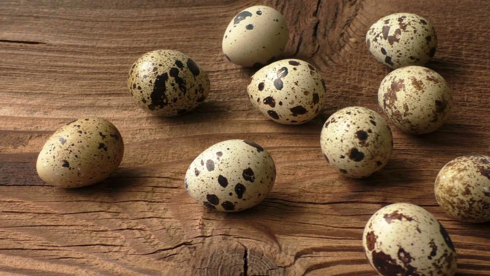 ouăle de prepeliță îmbunătățesc vederea)