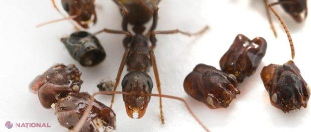 gama de vedere a furnicilor corectarea hipermetropiei