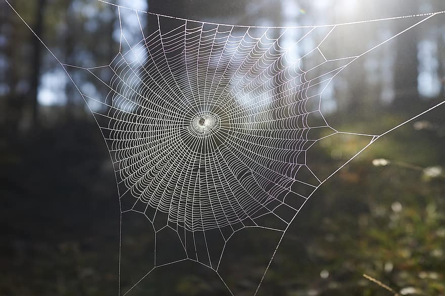 pânză de păianjen pentru vedere