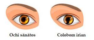 rândul testului ocular