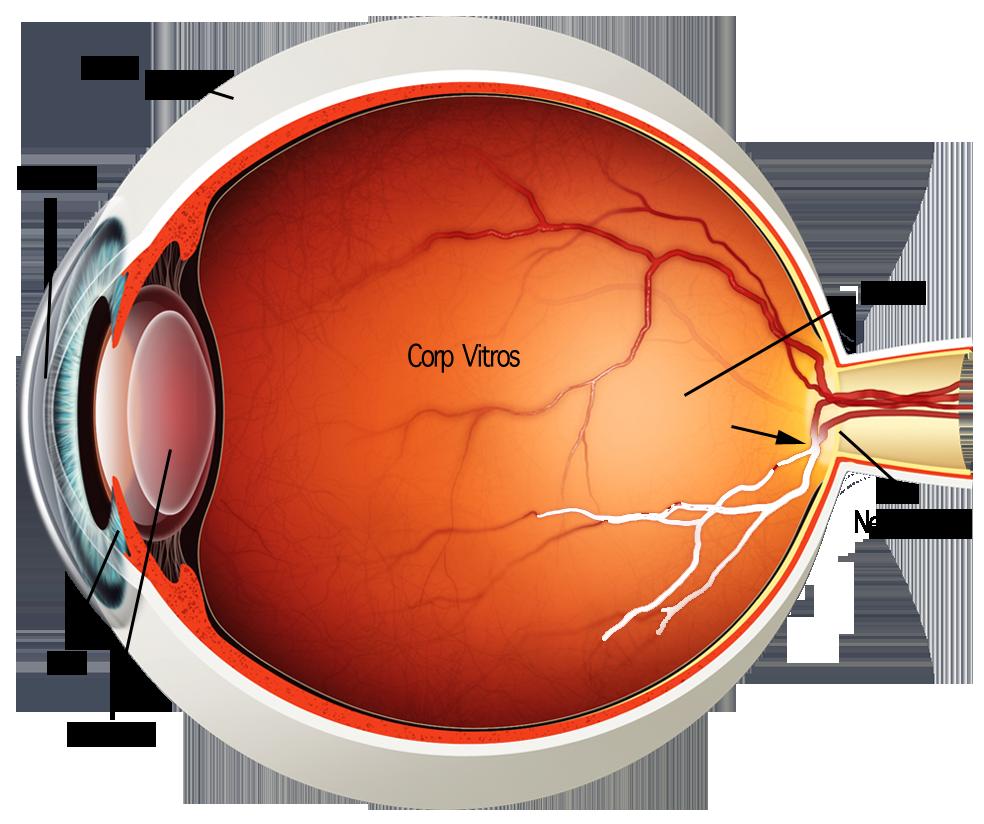 hipoxia afectează vederea