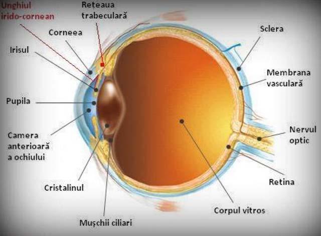 boala vasculară a vederii