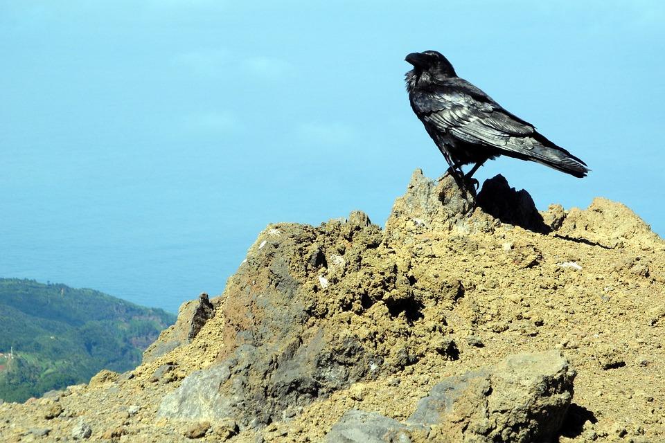 vedere corb